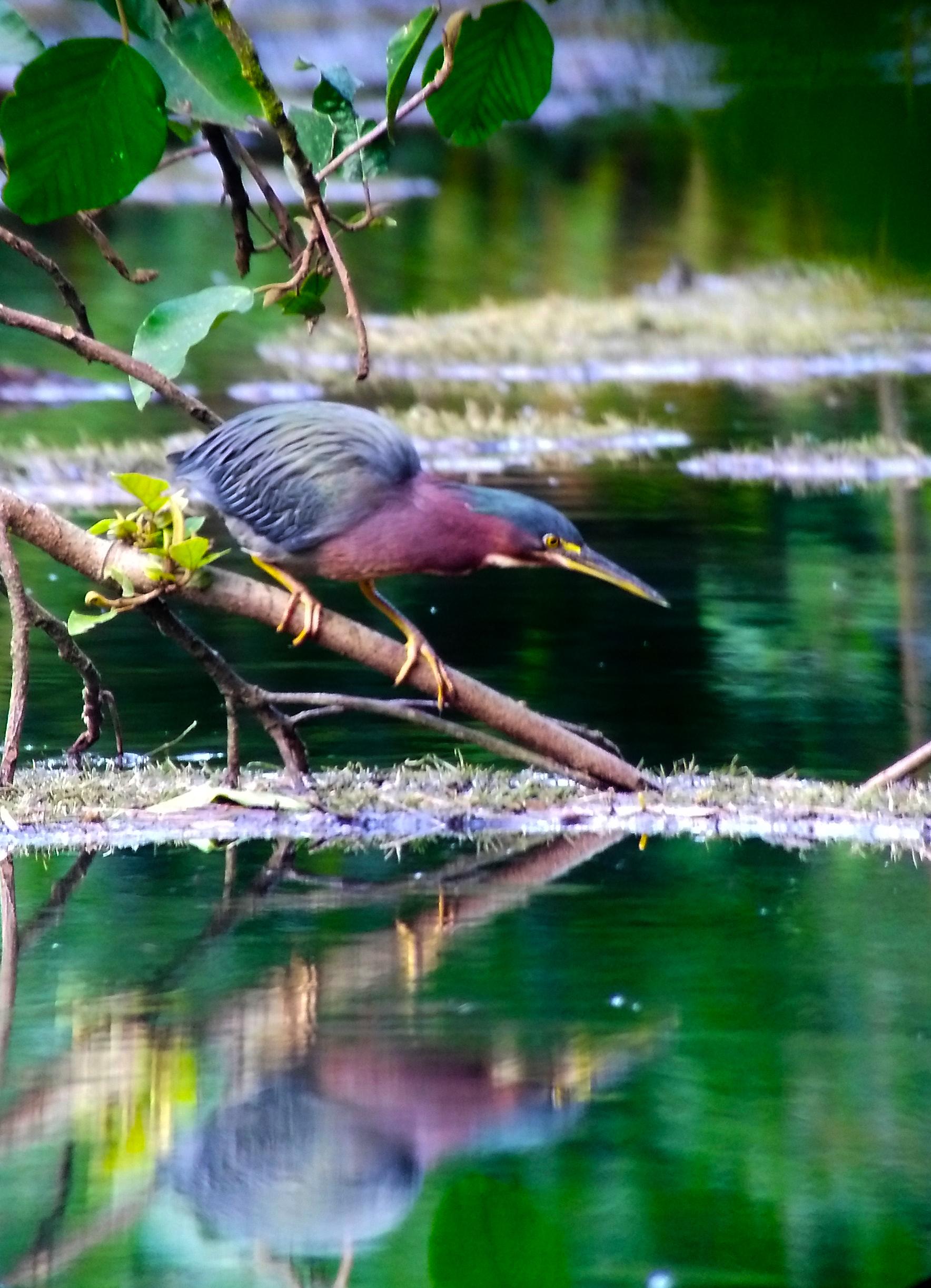 Lago De Yojoa Birds