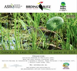 The Lake Yojoa Birding Blitz is a yearly event organized by Beaks and Peaks and the Honduran Ornithology Association (ASHO) – with the valuable support of several local and national organizations and instances – that offers an amazing combination of great birdwatching, excellent companionship and scientific research. Every year, we attempt to record the more than 500 bird species in the various national parks, private reserves and protected areas in the Lake Yojoa area. This unique birding experience is attended by many enthusiastic birdwatchers from both Honduras and abroad. Together they contribute to the monitoring of the bird life in this beautiful region.