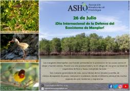 Día Internacional del Manglar 26 de Julio